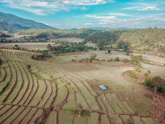 Карта фермы риса, вид птичьего полета