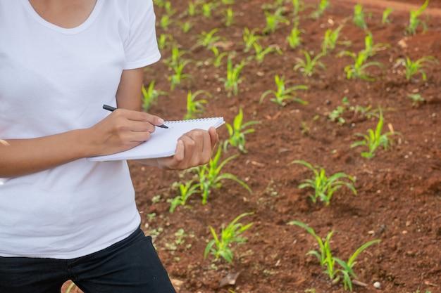 女性の植物研究者は、トウモロコシの実生の畑で確認し、メモを取っています。