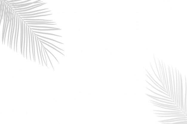 白い壁の背景に抽象的な影黒白いヤシの葉