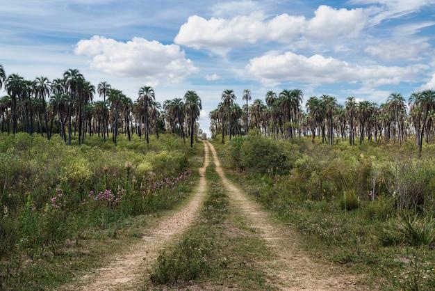 バックグラウンドでヤシの木のフィールドと田舎道