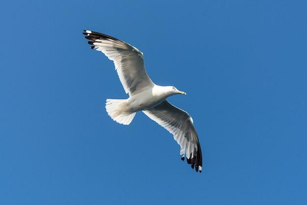 Белая птица летит с голубым небом