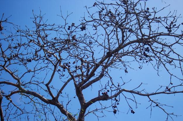 空の上の乾燥木