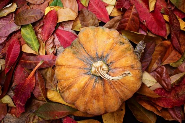 秋のカラフルな葉の上のカボチャ