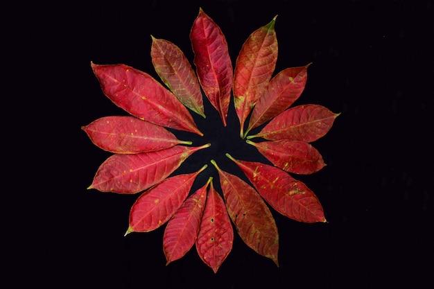 暗闇の中で秋の葉