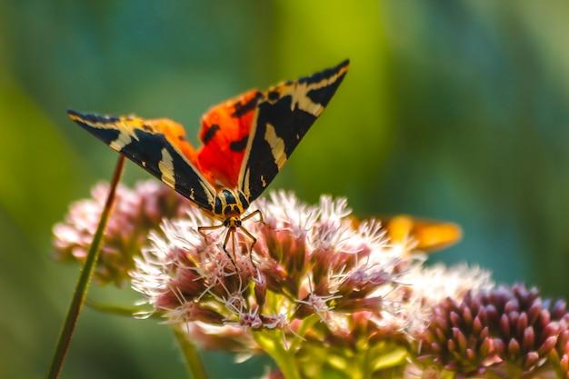 Красивая бабочка на цветах