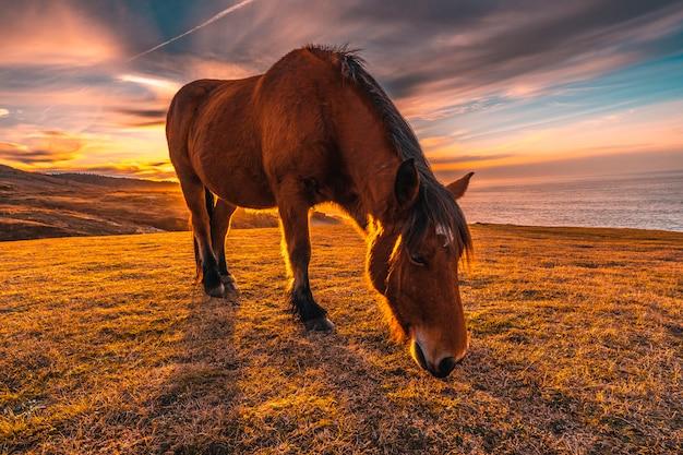 Лошадь на закате джайзкибеля. страна басков