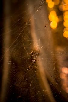 テラカリブ海のプンタデサルのジャングルにあるクモ。ホンジュラス