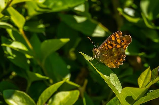 葉の上の黄色の蝶
