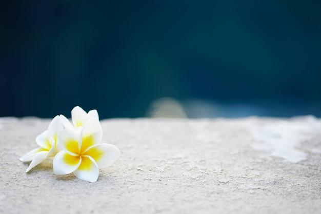 フランジパニの花
