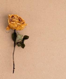 乾いた薔薇の花、茶色の紙