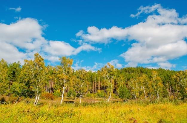 美しい秋の風景。雲と青空を背景に森。
