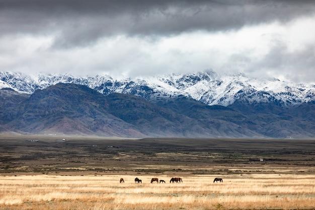 黄金の草原の牧草地の劇的な空の馬