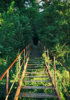 深い森を昇る古い金属製の階段