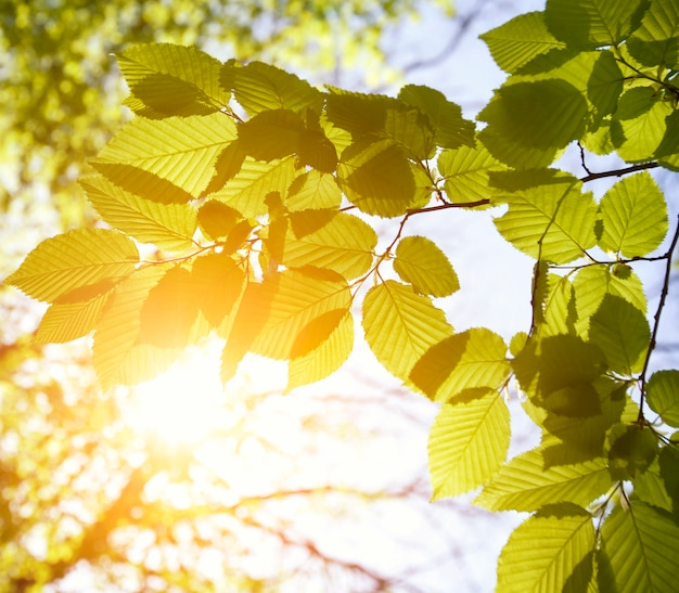 晴れた日の森の緑の葉