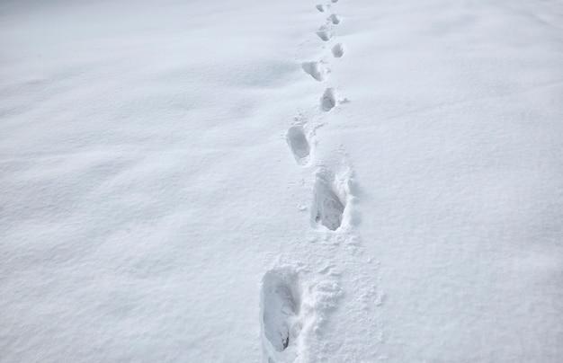 雪の上の足音がたくさん