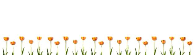 コピースペースが白い背景で隔離の黄色と赤のチューリップの花の組成物。休日のコンセプトです。