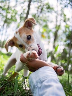 Маленькая собака, играя с владельцем в саду.