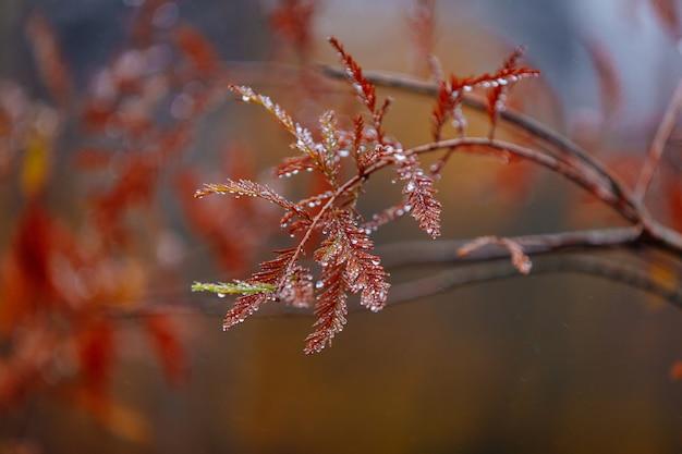 雨上がりの滴と針葉樹の自然なパターン