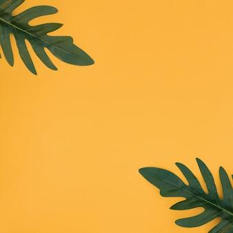 黄色の背景に熱帯のヤシを葉します。夏のコンセプトです。