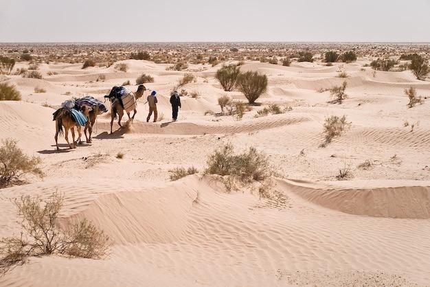 サハラ砂漠のガイドとラクダ