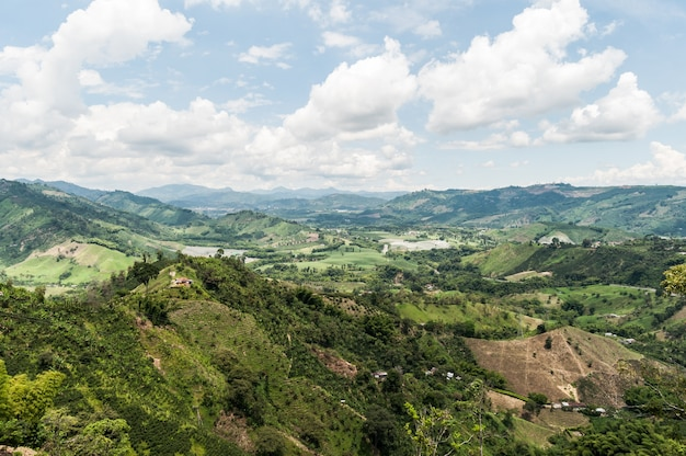 コーヒー豆グリーンミスト農業農場コロンビア