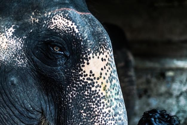 象のインド