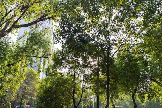 森林公園メキシコ