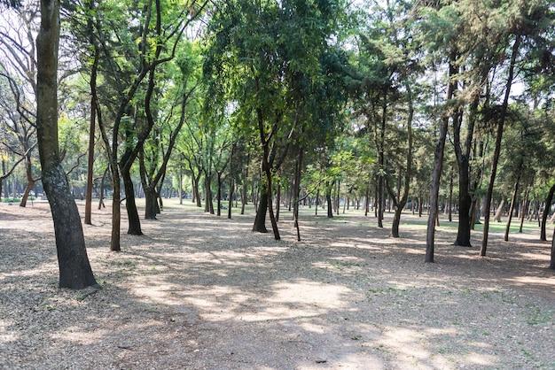 森林メキシコシティチャプルテペック