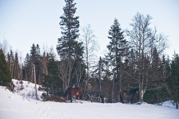 ノルウェー・トロンハイム・ヨーロッパ