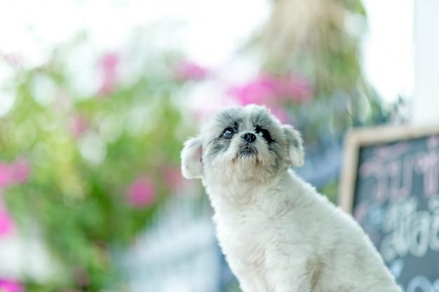 白犬の写真、かわいい写真撮影、愛犬のコンセプト