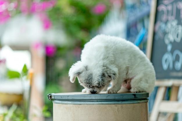 白い犬の絵