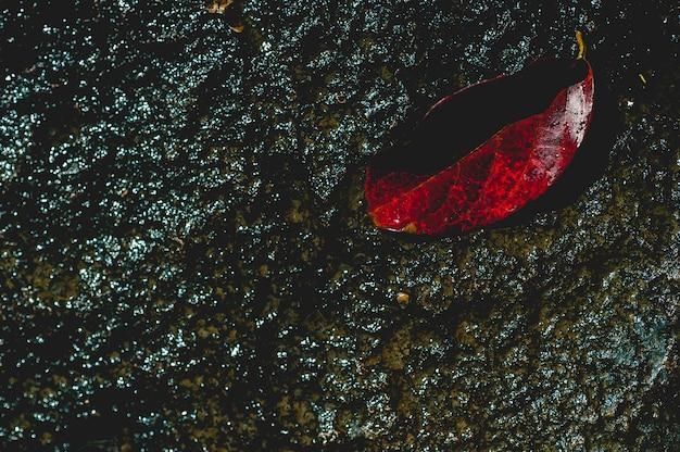 コピースペースと自然の概念を通って流れる水の下で赤い葉のイメージ