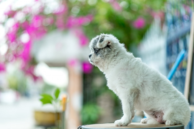 Картинка белой собаки, милая фотосессия, концепция любви собаки