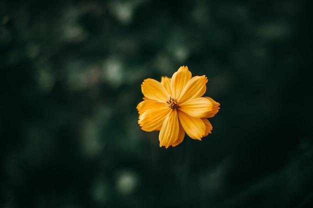 Обильные натуральные желтые цветы концепции цветов и растений
