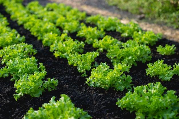 農民からの菜園