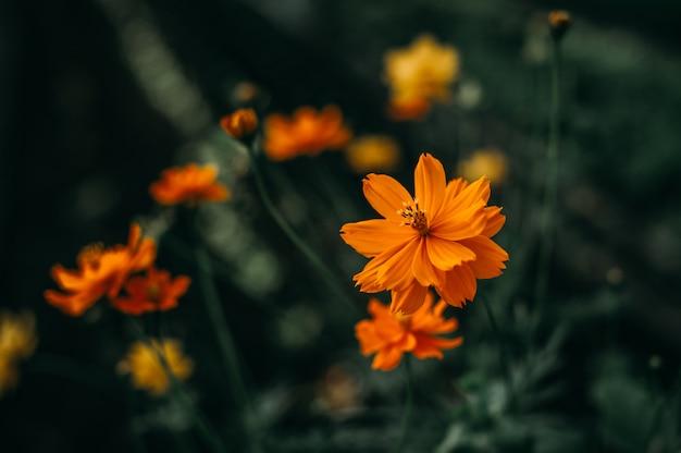 Обильные натуральные желтые цветы