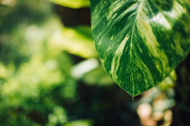 Зеленые листья, зеленая природа, фото листьев