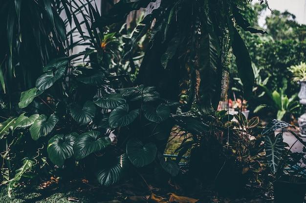 自然からの緑の葉緑の面積と葉