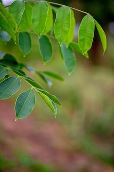 Зеленые листья, фотографии зеленых листьев, которые богаты природными территориями.