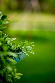 葉の緑豊かな若い芽美しい、美しい自然の概念