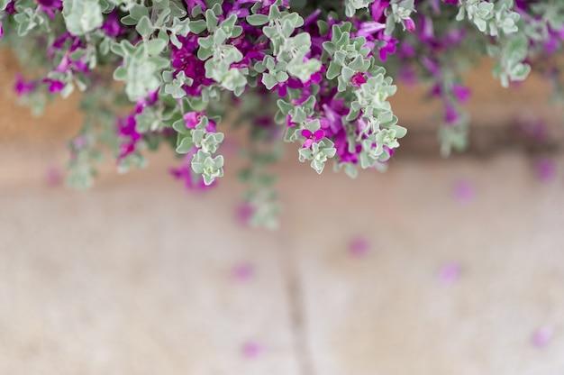白い葉の木から紫の花自然の美しさ