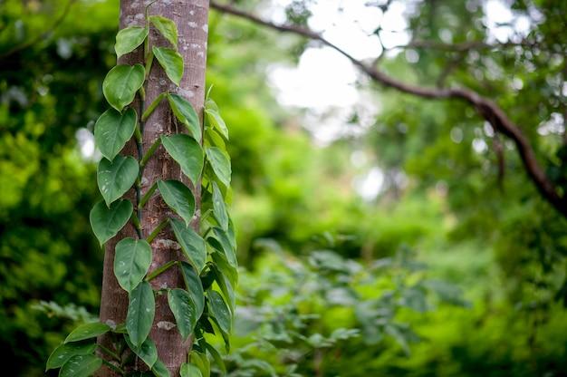 Красивые зеленые листья в сезон дождей