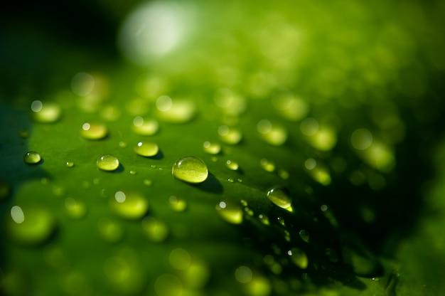 Капли росы на листьях не зеленые