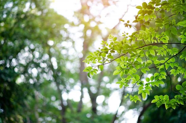 Плодородные зеленые листья и деревья