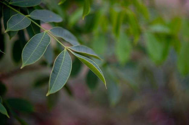 Зеленые листья в саду