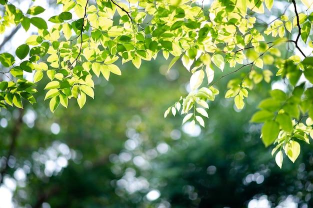 肥沃な緑の葉と木