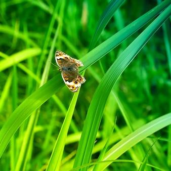 葉を蝶します。