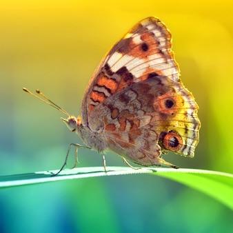 蝶、昆虫、草