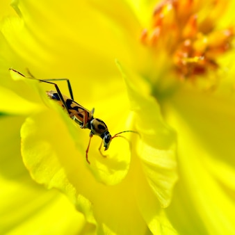 黄色の花の昆虫