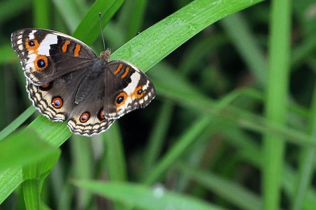 草を蝶します。